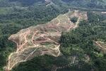Oil palm plantation -- sabah_0573