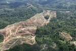 Oil palm plantation -- sabah_0574