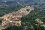 Oil palm plantation -- sabah_0575