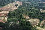 Oil palm plantation -- sabah_0576