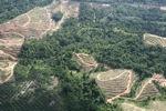 Oil palm plantation -- sabah_0577