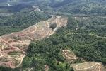 Oil palm plantation -- sabah_0578