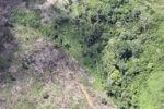 Oil palm plantation -- sabah_0579