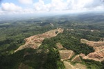 Oil palm plantation -- sabah_0580