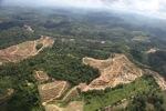 Oil palm plantation -- sabah_0581