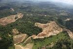 Oil palm plantation -- sabah_0583