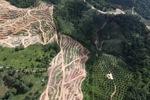 Oil palm plantation -- sabah_0592