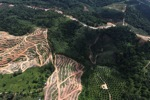 Oil palm plantation -- sabah_0593