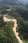 Oil palm plantation -- sabah_0599