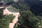 Oil palm plantation -- sabah_0603