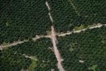 Oil palm plantation -- sabah_0604