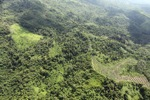 Oil palm plantation -- sabah_0605