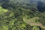 Oil palm plantation -- sabah_0606