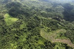 Oil palm plantation -- sabah_0607