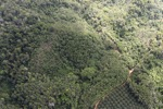 Oil palm plantation -- sabah_0608