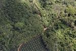 Oil palm plantation -- sabah_0609