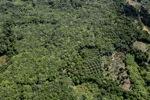 Oil palm plantation -- sabah_0611