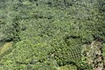 Oil palm plantation -- sabah_0613