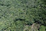 Oil palm plantation -- sabah_0614