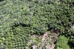 Oil palm plantation -- sabah_0615