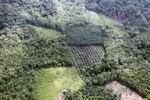 Oil palm plantation -- sabah_0617