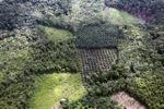 Oil palm plantation -- sabah_0621