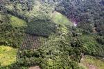 Oil palm plantation -- sabah_0622