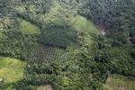 Oil palm plantation -- sabah_0623