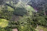 Oil palm plantation -- sabah_0624