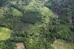 Oil palm plantation -- sabah_0626