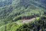 Deforestation in Borneo -- sabah_0627