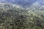 Logging road -- sabah_0628