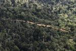 Logging road -- sabah_0629