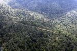 Logging road -- sabah_0630