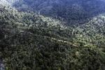 Logging road -- sabah_0631