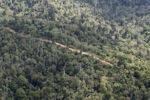 Logging road -- sabah_0632