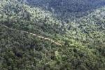 Logging road -- sabah_0633