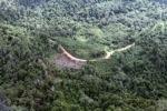Logging road -- sabah_0635