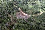 Logging road -- sabah_0636