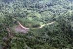 Logging road -- sabah_0637