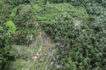 Deforestation in Borneo -- sabah_0638