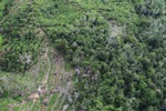 Deforestation in Borneo -- sabah_0641