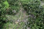 Deforestation in Borneo -- sabah_0643