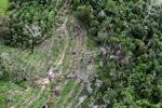 Deforestation in Borneo -- sabah_0644