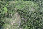 Deforestation in Borneo -- sabah_0645