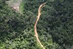 Logging road -- sabah_0652