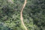 Logging road -- sabah_0654