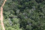 Logging road -- sabah_0656