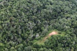 Logging road -- sabah_0657