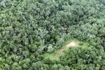 Logging road -- sabah_0658